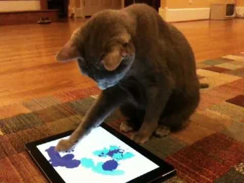 paint for cats apps