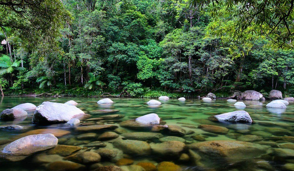Daintree Forest and National Park