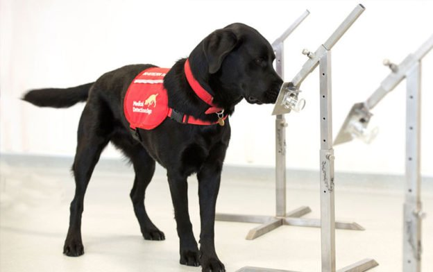 Quest to Make The Robot Smell Cancer Like A Dog